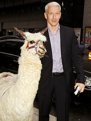 Anderson Cooper With a Llama: Photo
