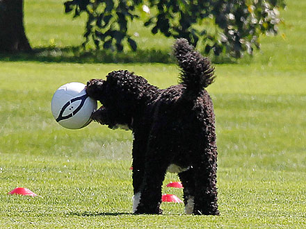 Gooooal! Bo Obama Plays Soccer at the White House