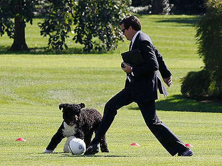 Gooooal! Bo Obama Plays Soccer at the White House| Cute Pets, Dogs