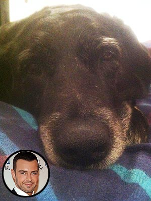 Whoa! Joey Lawrence Pays $1,000 to Rescue a Dog | Joey Lawrence