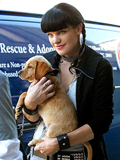 NCIS Star Pauley Perrette Uncovers the Secret to Animal Longevity