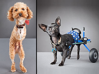 Pets with Disabilities Smile for Photographer's Camera| Dogs