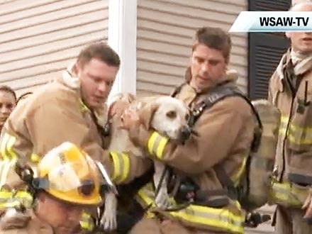 Firefighters Save Dog Using Mouth-to-Snout