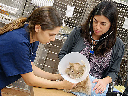 Jack the Cat in Critical Condition at Hospital| Cats