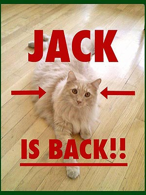 The Water Bowl: Jack the Cat Has Been Found!