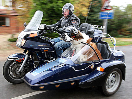 Motorcycle Hound! St. Bernard Rides a Sidecar| Dogs