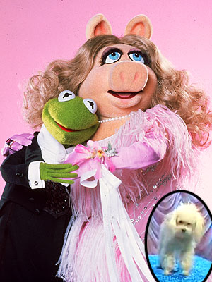 Muppet Mess: Miss Piggy Forced to Choose Between Her Dog and Her Frog