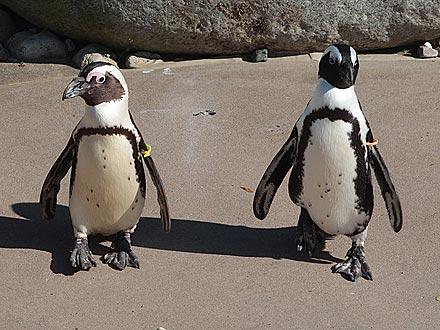 penguin 440 Then Underground journalist