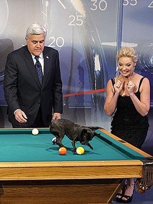 Score! Katherine Heigl Meets Pool-Playing Chihuahua | Katherine Heigl