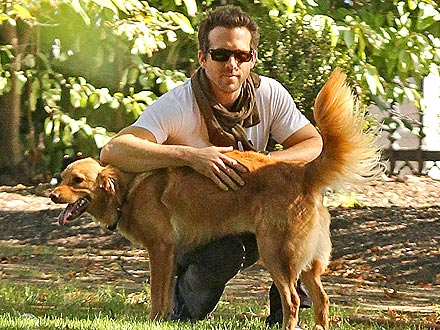 Blake Lively Plays Dog-Sitter for Ryan Reynolds| Stars and Pets, Dogs, Blake Lively, Ryan Gosling, Actor Class