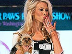 Fashion for Paws: Dogs Hit the Catwalk