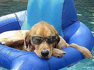 Show Us Your Pets at the Pool!