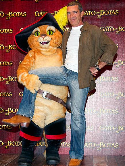 CAT FANCY  photo | Antonio Banderas
