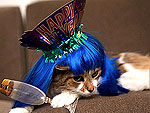 Cheers! Pets Toast the New Year