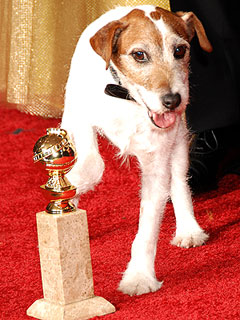 Move Over, George! Uggie the Dog Steals the Show at Golden Globes