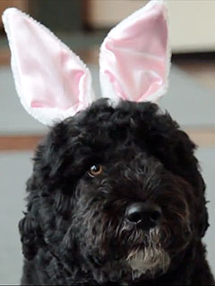 VIDEO: Bo Dresses as the Easter Bunny! | Bo Obama