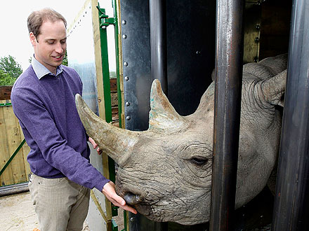 Prince William Feeds Black Rhino at Port Lympne Wild Animal Park