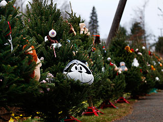 PHOTO: 26 Christmas Trees for 26 Killed at Sandy Hook Elementary