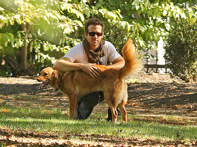 PARK IT photo | Ryan Reynolds
