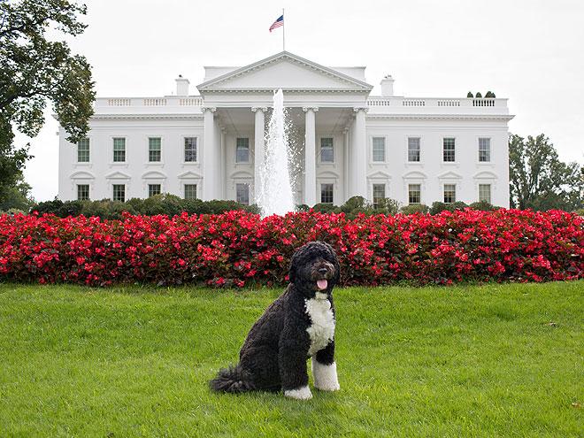 HOME AGAIN photo | Bo Obama