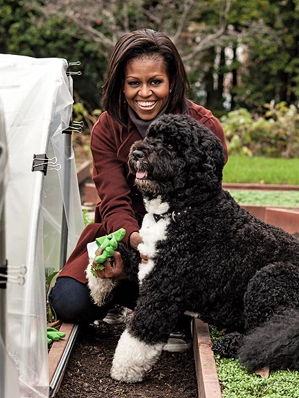 http://img2.timeinc.net/people/i/2012/pets/gallery/bo-birthday/bo-obama-3-435.jpg