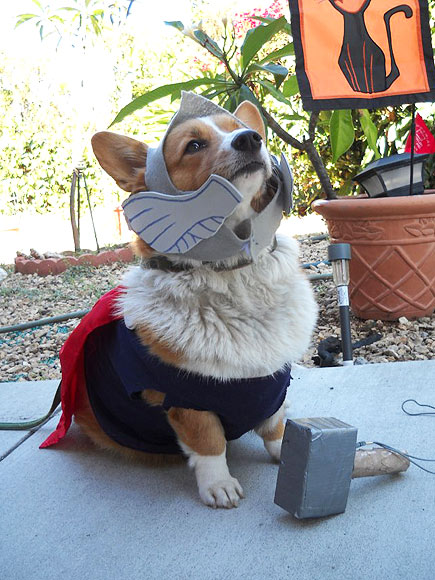 Howl-o-ween Spooktacular! Pets in Costume