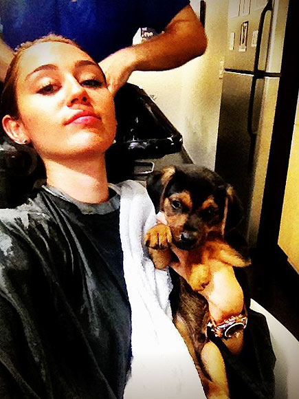 GROOMER HAS IT photo | Miley Cyrus