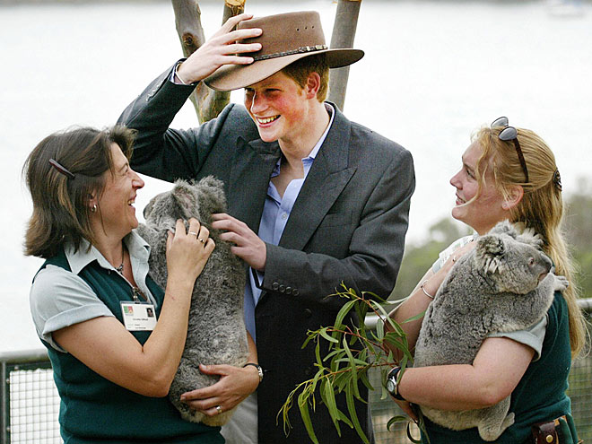 KOALA-TY CONTROL photo | Prince Harry