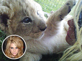 She's a Real 'Animal'! Ke$ha Gets Lion Cub Named After Her | Kesha