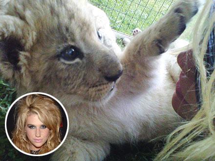 Ke$ha Gets Lion Cub Named After Her