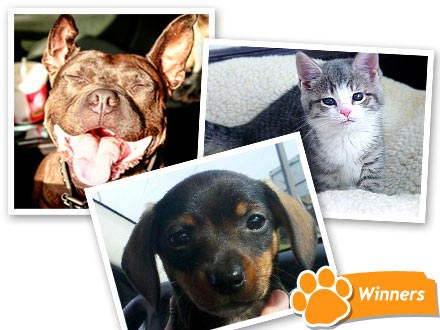 Meet the Winners of Click the Cutest: Rachael Ray&#39;s Shelter Helpers!| Animal Charities