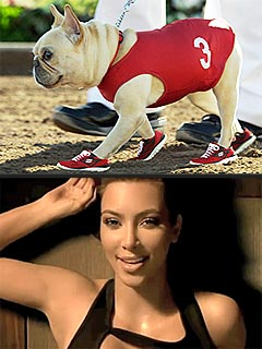 Who Would You Rather See in an Ad: Kim Kardashian or a French Bulldog? | Kim Kardashian