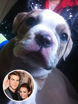 Miley Cyrus Gets Liam Hemworth a Puppy for His Birthday