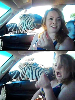 The Water Bowl: Zebra Attacks Woman at Safari Park!