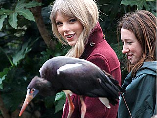 Birds-Eye View! Taylor Swift Makes Feathered Friends in London | Taylor Swift