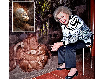 Baby Orangutan&#39;s New Name: Inspired by Betty White!