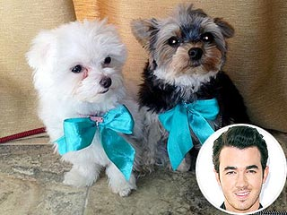 Kevin Jonas's Goal for 2012? Potty Train His Pups | Kevin Jonas
