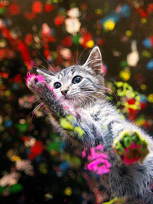 Purring Painters Raise Money for Animal Rescue| Cats