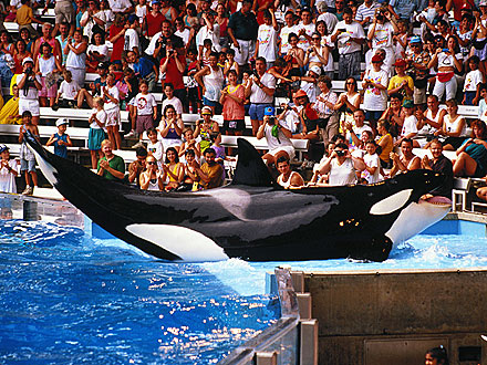 SeaWorld Sued by Killer Whales and PETA