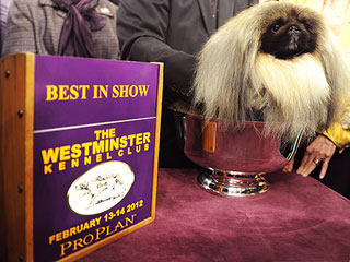 What's a Pekingese? Five Things to Know