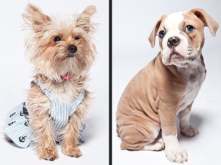 Miley Cyrus&#39;s Dogs Turn to Modeling| Stars and Pets, Dogs, Miley Cyrus