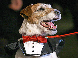 The Water Bowl: Uggie Will Not Perform at Oscars