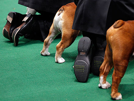 10 Wackiest Photos from Westminster| Dogs, Westminster Kennel Club Dog Show, Martha Stewart