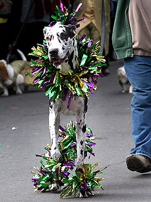 Happy Fat Tuesday! Dogs Celebrate Mardi Gras| Dogs