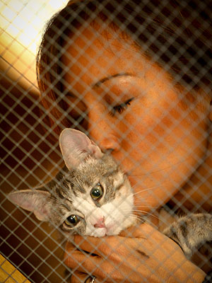 Carrie Ann Inaba Starts Web Show for Shelter Cats| Animal Charities, Cats, Stars and Pets, Dancing With the Stars, Carrie Ann Inaba