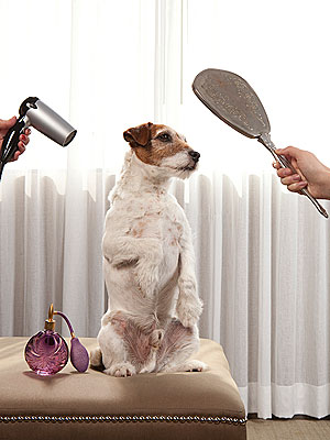 Uggie The Artist Oscars Grooming Routine