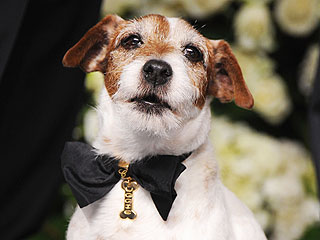 All About Uggie's Custom Chopard Collar | Uggie
