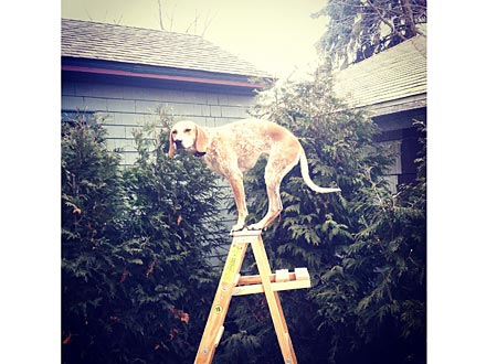 Maddie on Things! Coonhound Balances in All 50 States| Dogs, Photography
