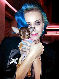 Katy Perry Finds Puppy Love in Paris | Katy Perry