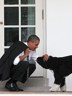 Presidential Health Break! Obama Takes a Breather with Bo | Bo Obama, Barack Obama